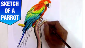 sketch of a parrot youtube
