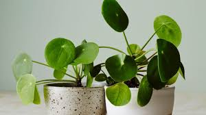 how to buy the right indoor plants for your home