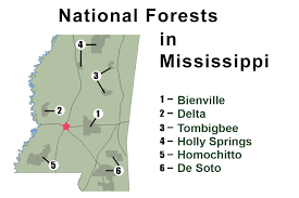 Mississippi forest images National forests in mississippi about the forest jpg