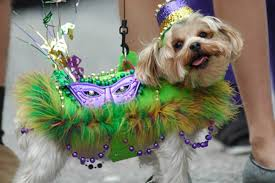 18 dogs who rule at mardi gras rover
