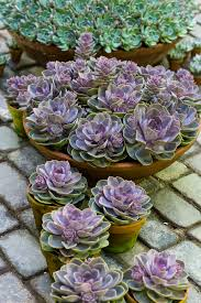 pots for succulents for sale google image result for http floradania dk fileadmin s3 planter