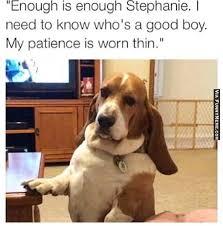 Annoyed Dog Meme - hilarious dog memes every dog gets