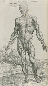 looking at the difference from anatomy images and da vinci u0027s work