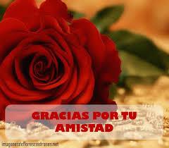 imagenes de amor con rosas animadas románticas imágenes de rosas rojas con frases de amor