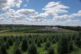 blue ridge christmas tree farm christmas trees 1063