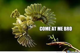 Mantis Meme - kung fu mantis by anleu22 meme center