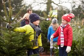 trendy design christmas tree shopping fresh ideas courtney stodden