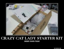 Crazy Dog Lady Meme - crazy cat lady starter kit by yukiko zaraki on deviantart