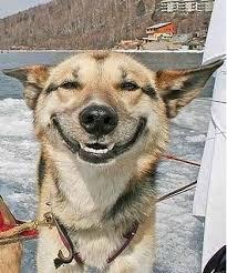 Happy Dog Meme - create meme happy dog