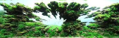 Aquascape Design Layout Beautifully Designed Aquariums Compete In The International