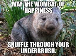 Wombat Memes - wombat of happiness aminal memes pinterest happiness and