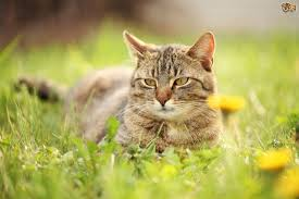 five safe and effective ways to keep your cat out of parts of your