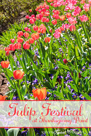 family activities to do in utah series tulip festival at