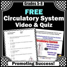 circulatory system here is a free circulatory system worksheet or