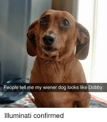 Wiener Dog Meme - people tell me my wiener dog looks like dobby illuminati confirmed