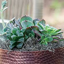 Easy Care Indoor Plants House Plants Shop Easy Care House Plants At Jackson And Perkins