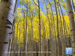 northern arizona fall foliage gallery 2016 ten travel blog
