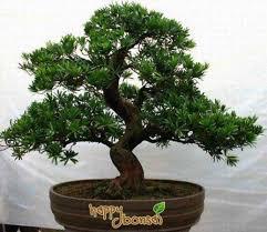 natalie u0027s mysterious christmas tree by hawkeye pete egan b