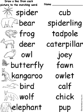 animal spelling worksheets at enchantedlearning com