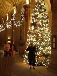 the christmas trees picture of the spa at the breakers palm