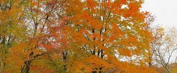 autumn is getting later just ask the trees birds and butterflies