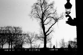 tree in paris black and white u2013 free photo on barn images