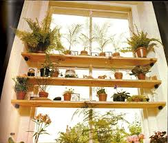 indoor plant display 64 best house plant display images on pinterest indoor house