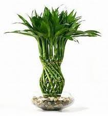 best indoor plants for low light the best low light house plants home interior design themes