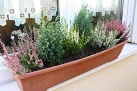 herbstbepflanzung balkon herbstliche blumenkästen und kübel