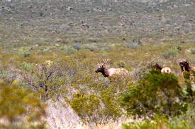 are elk native to texas yes circle ranch