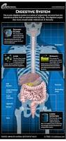 best 25 human digestive system ideas on pinterest get revising