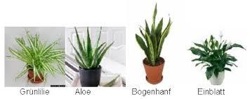 grünpflanzen im schlafzimmer schlafzimmer pflanzen pflanzen im schlafzimmer pflanzenfreunde