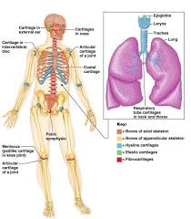 Anatomy Of The Human Body Bones Function And Classification Of Bones Anatomy U0026 Physiology
