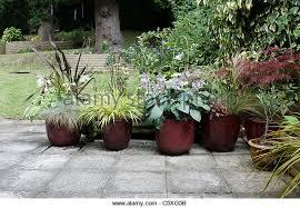ornamental planters stock photos ornamental planters stock