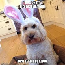 Cute Easter Meme - easter memes kappit