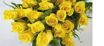 yellow roses with tips meaning of the yellow flower experts gives you tips and
