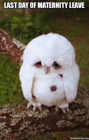 Maternity Memes - last day of maternity leave sad owl make a meme