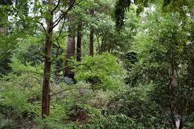 Uc Berkeley Botanical Gardens A Breath Of Fresh Air Uc Berkeley Botanical Garden Small World