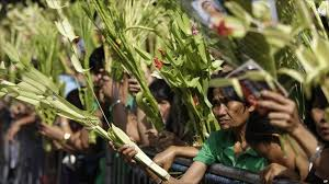 palm fronds for palm sunday news in pictures christians celebrate palm sunday