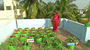 Gardening For Beginners Vegetables by How To Grow Vegetables In A Container Or Pots On The Terrace