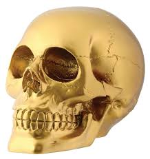 amazon com gold skull head collectible skeleton decoration