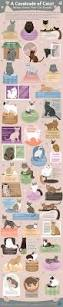 a cavalcade of cats visual ly