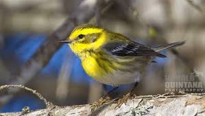 Birds In Your Backyard How To Take Great Bird Photos In Your Backyard Mnn Mother