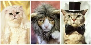 Cat Costumes Halloween 30 Pet Cat Halloween Costumes 2017 Cute Ideas Cat Costumes
