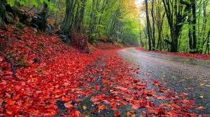 fall forest road red fallen leaves damp earth forest with trees