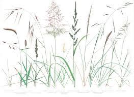 planting native grasses kristin jakob