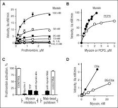 prothrombotic skeletal muscle myosin directly enhances prothrombin