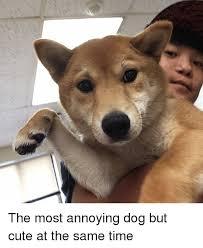 Annoyed Dog Meme - 25 best memes about annoyed dog annoyed dog memes
