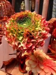 Ranunculus Daily Flower Candy Ranunculus Pon Pon Series U2013 The Frustrated