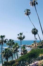 Palm Tree Wallpaper 107 Best Palm Trees Images On Pinterest